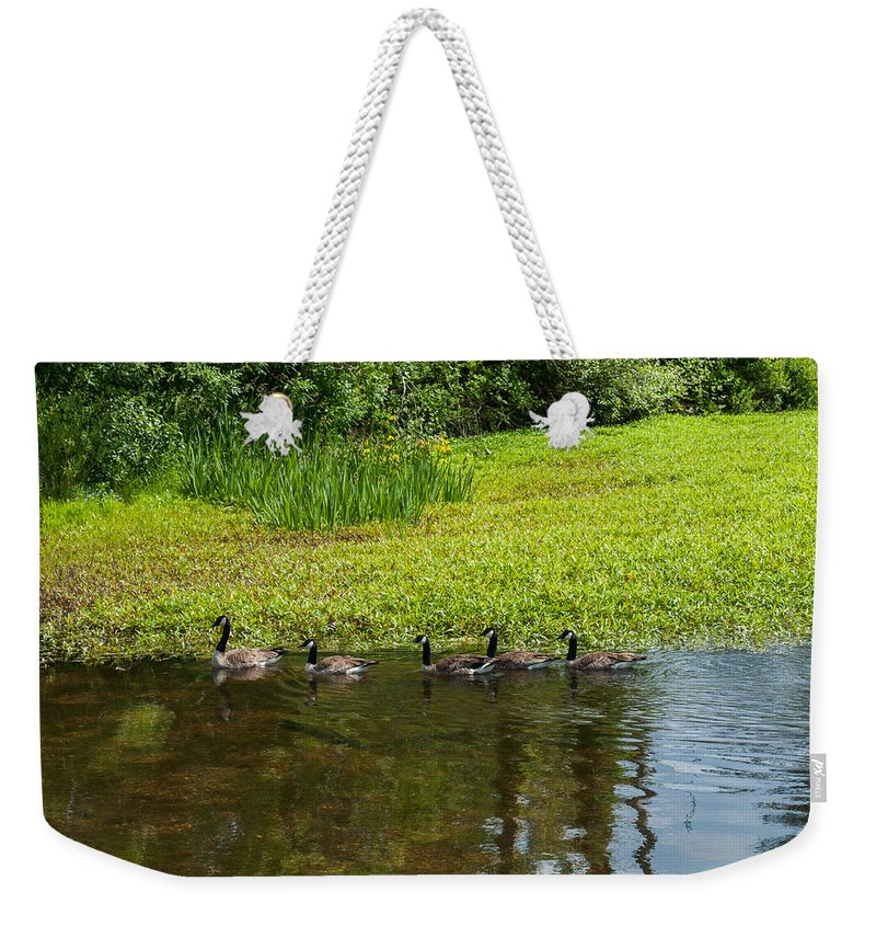 Goose Weekender Tote Bag featuring the photograph Family Swim by Tikvah's Hope