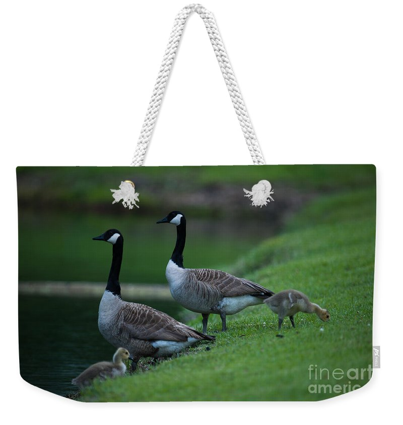 Geese Weekender Tote Bag featuring the photograph Family Time by Dale Powell