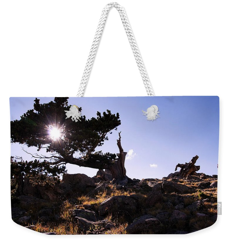 Bristlecone Pine Photograph Weekender Tote Bag featuring the photograph Fan Dance by Jim Garrison