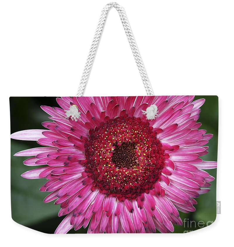 Flower Weekender Tote Bag featuring the photograph Fancy Pink Daisy by Deborah Benoit
