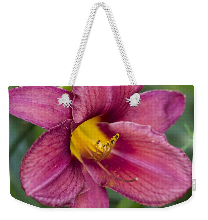 Hemerocallis Weekender Tote Bag featuring the photograph Fancy Red Wine Daylily by Kathy Clark