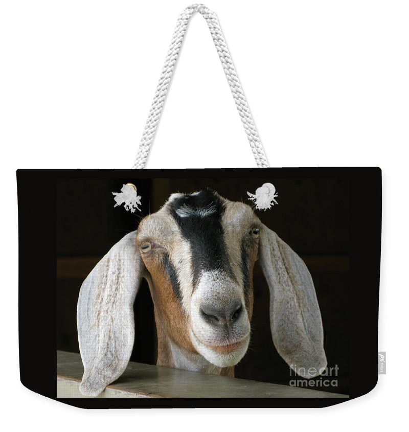 Goat Weekender Tote Bag featuring the photograph Farm Favorite by Ann Horn