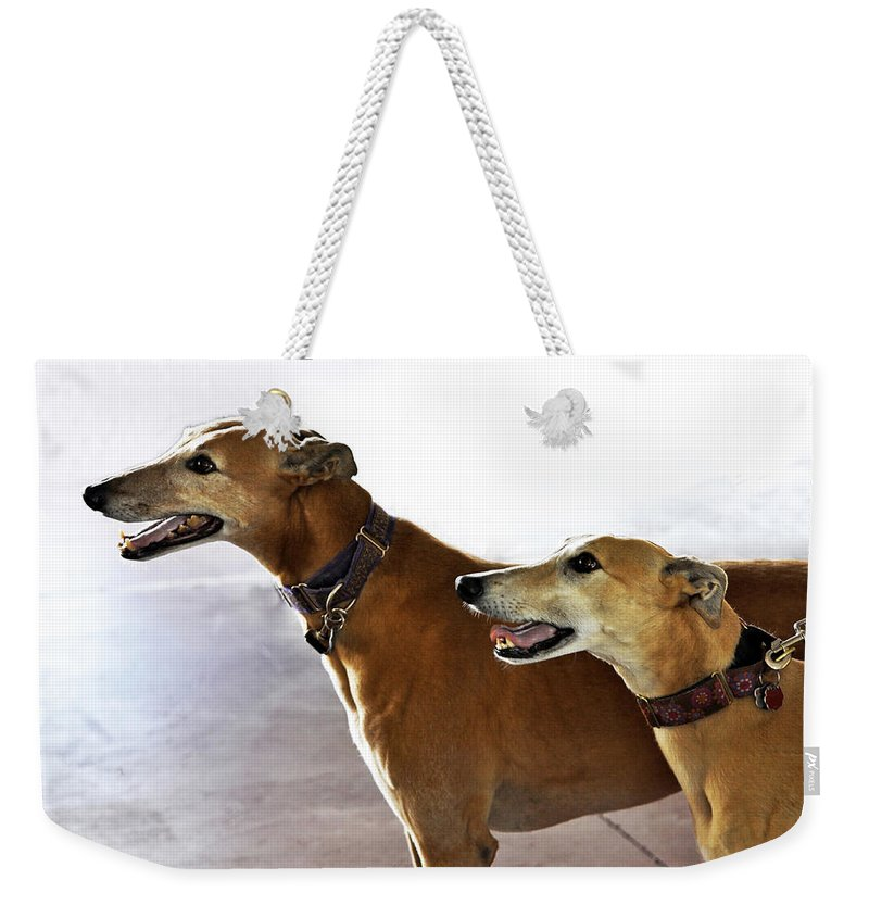 Fawn Weekender Tote Bag featuring the photograph Fawn Greyhound Dogs Profile by Sally Rockefeller