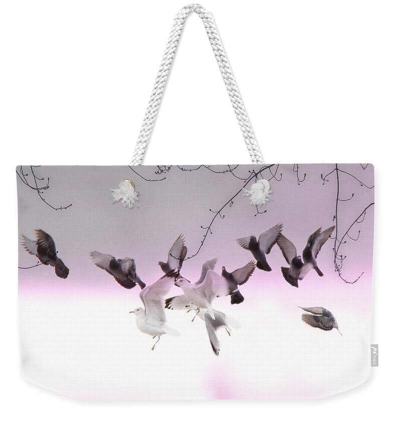 Pigeons Weekender Tote Bag featuring the photograph Feather Light by Gothicrow Images