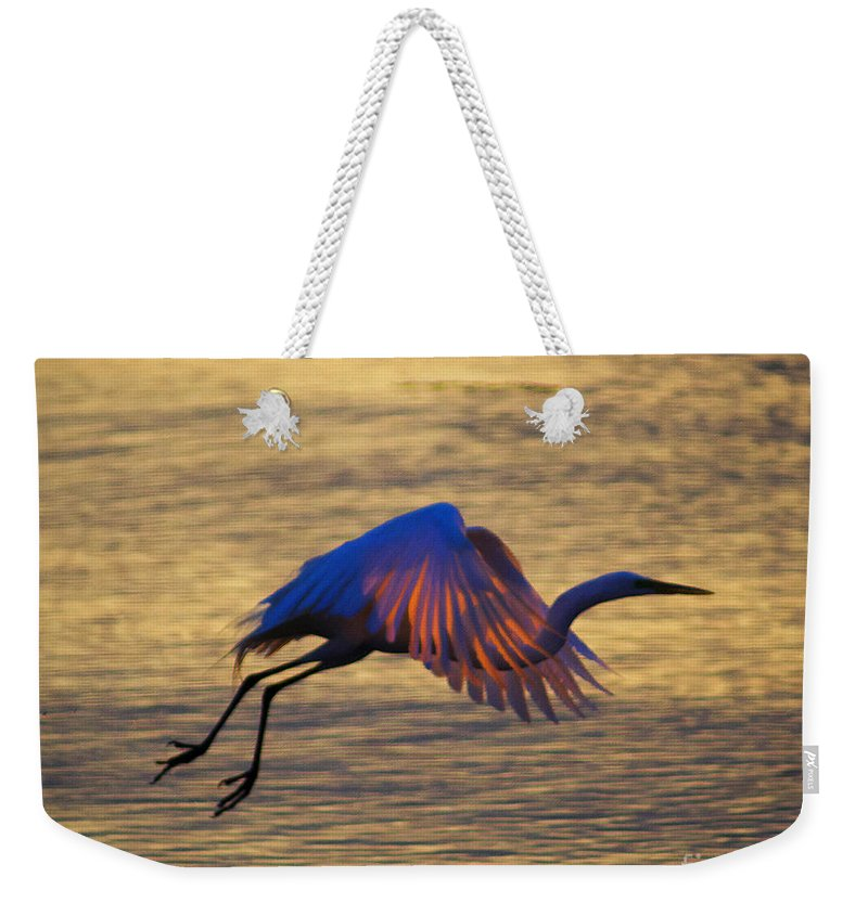 Egret Weekender Tote Bag featuring the photograph Feather-light by Joe Geraci