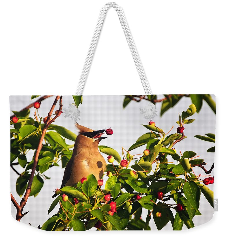 Cedar Waxwing Weekender Tote Bag featuring the photograph Feeding Cedar Waxwing by Timothy Flanigan