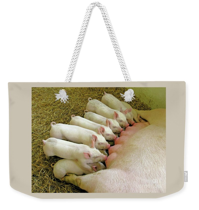 Pig Weekender Tote Bag featuring the photograph Feeding The Family by Ann Horn
