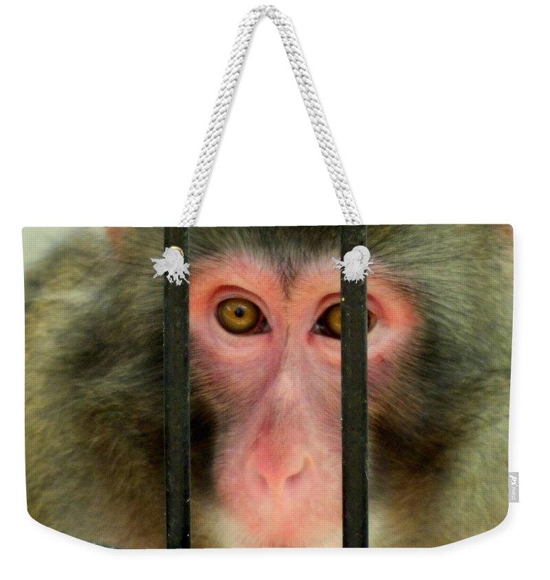 Monkeys Weekender Tote Bag featuring the photograph Feelings by Karen Wiles