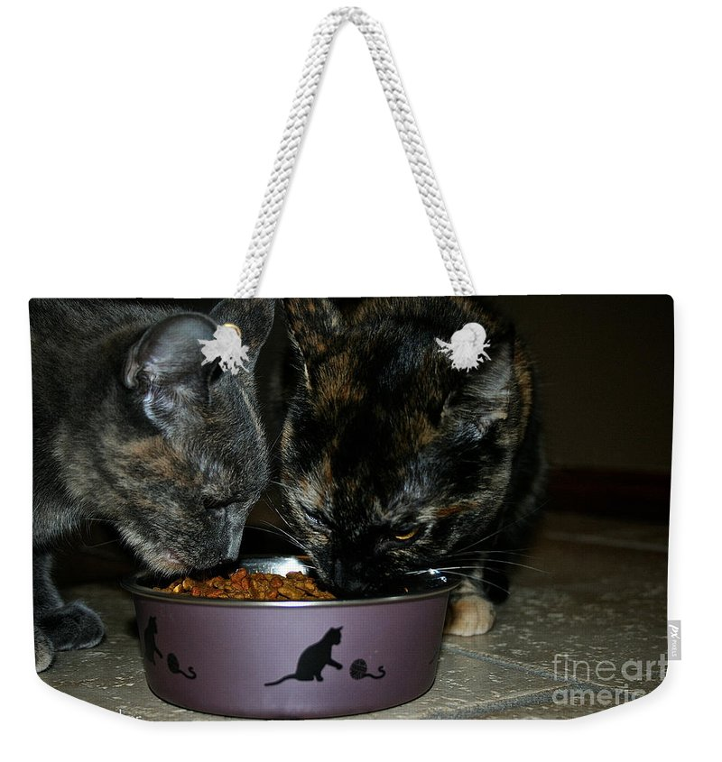 Cat Weekender Tote Bag featuring the photograph Feline Friends by Susan Herber