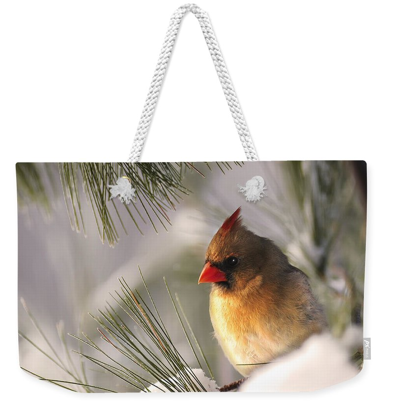 Female Cardinal Nestled In Snow Weekender Tote Bag featuring the photograph Female Cardinal Nestled In Snow by Randall Branham
