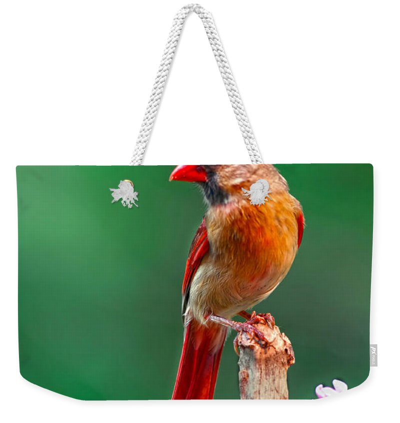 Female Posing Pretty On Snag Wrapped With Pea Vine Weekender Tote Bag featuring the photograph Female Cardinal Posing Pretty by Randall Branham