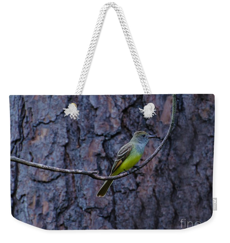 Bird Weekender Tote Bag featuring the photograph Female Great Crested Flycatcher by Donna Brown