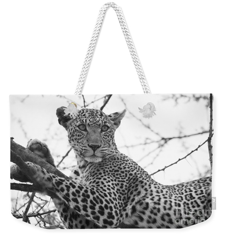 2012 Weekender Tote Bag featuring the photograph Female Leopard by Howard Kennedy