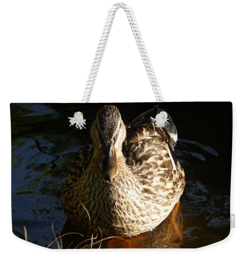 Female Weekender Tote Bag featuring the photograph Female Mallard In Pond by Jon Cody