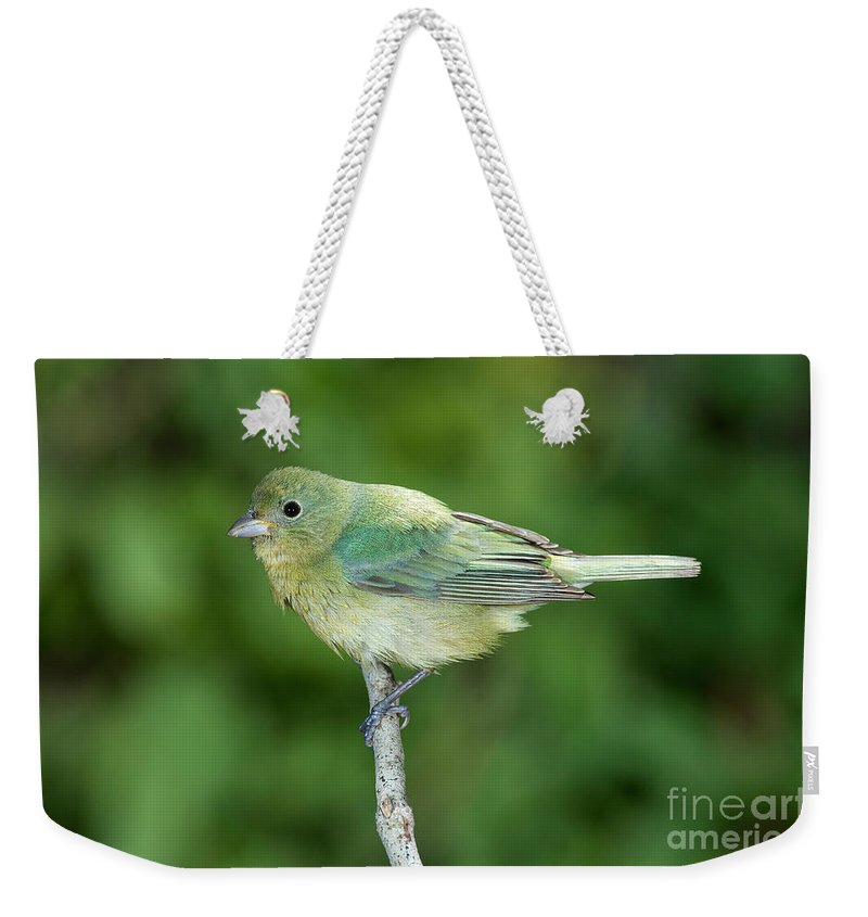 Fauna Weekender Tote Bag featuring the photograph Female Painted Bunting Passerina Ciris by Anthony Mercieca