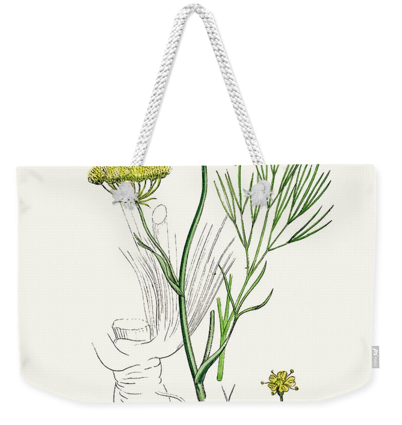 White Background Weekender Tote Bag featuring the digital art Fennel Plant Scientific Illustration by Mashuk