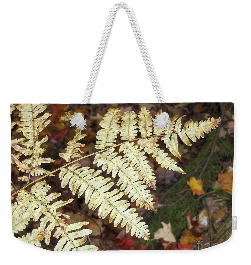 Fern Weekender Tote Bag featuring the photograph Fern In The Forest by Brenda Brown