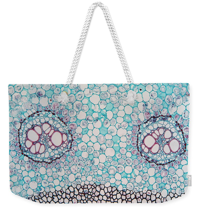 Science Weekender Tote Bag featuring the photograph Fern Pteridium Rhizome, Lm by Garry DeLong