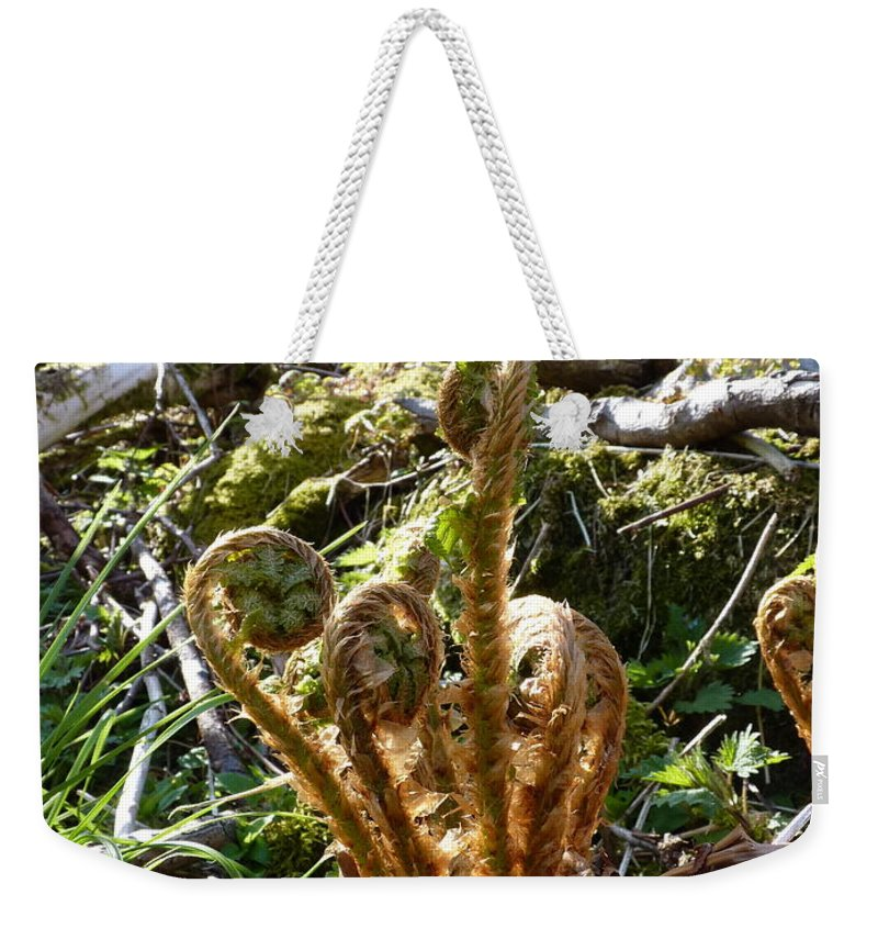 Weekender Tote Bag featuring the photograph Fern Swirls by Katerina Naumenko