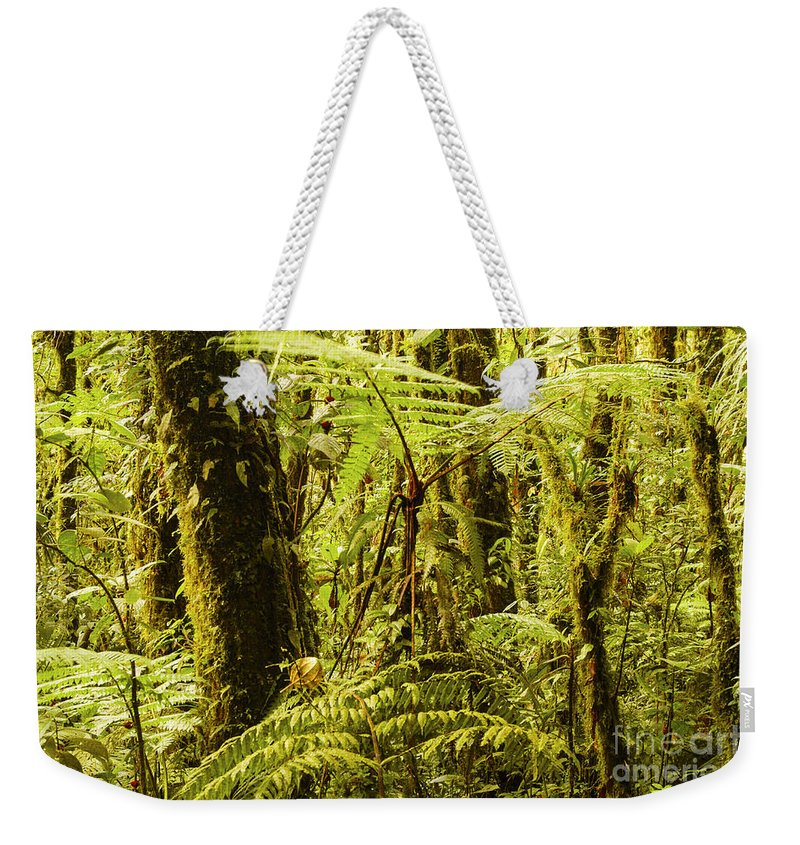 Monteverde Reserve Costa Rica Rainforest Fern Ferns Tree Trees Branch Branches Leaves Leaves Plant Plants Nature Moss Rainforest Rainforests Forest Forests Weekender Tote Bag featuring the photograph Ferns And Moss by Bob Phillips