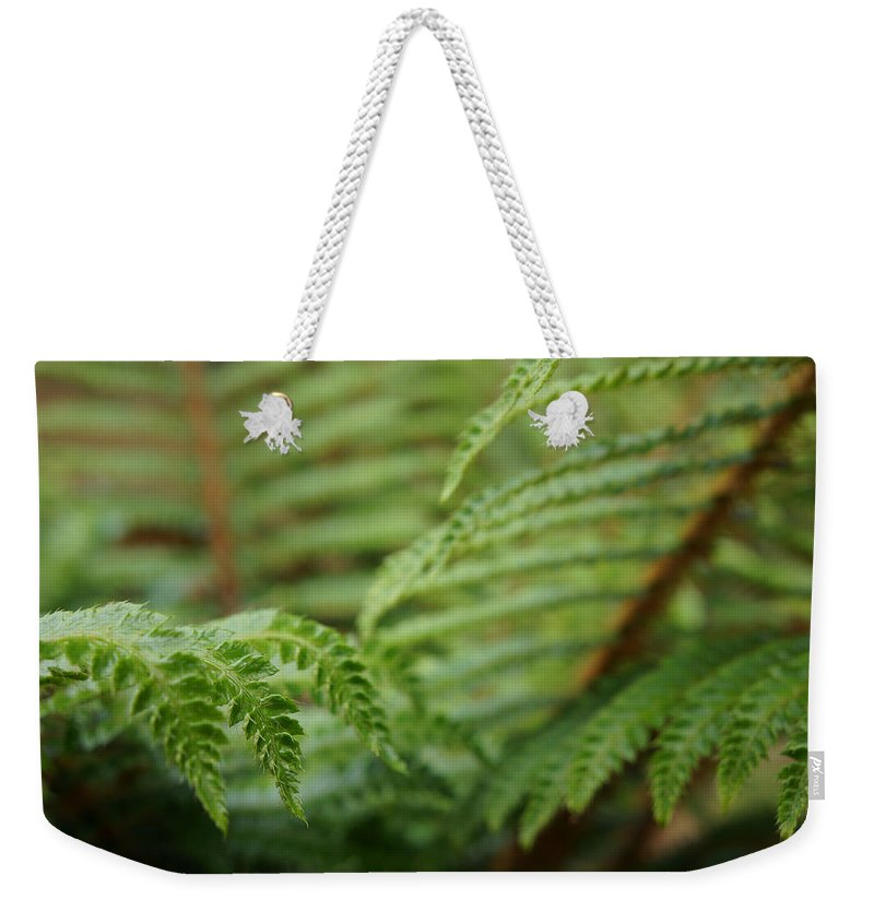 Fern Weekender Tote Bag featuring the photograph Ferns Art Prints Green Fores Fern by Patti Baslee