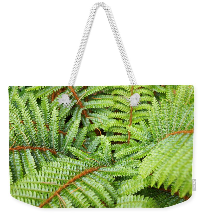 Fern Weekender Tote Bag featuring the photograph Ferns Forest Art prints Green Fern Fronds by Patti Baslee