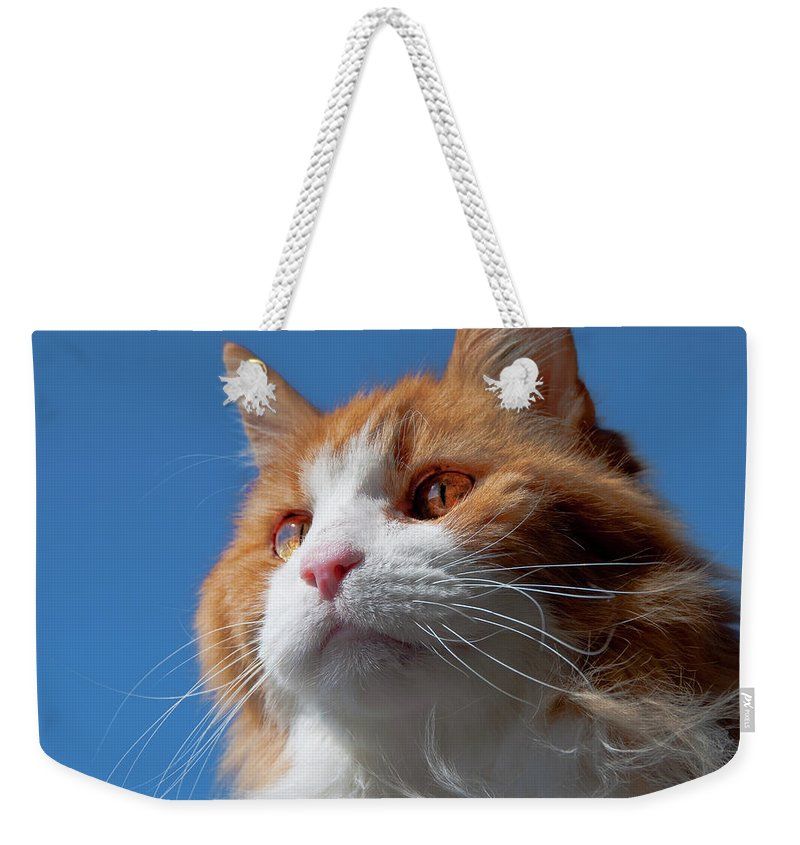 Festblues Weekender Tote Bag featuring the photograph Festus... by Nina Stavlund