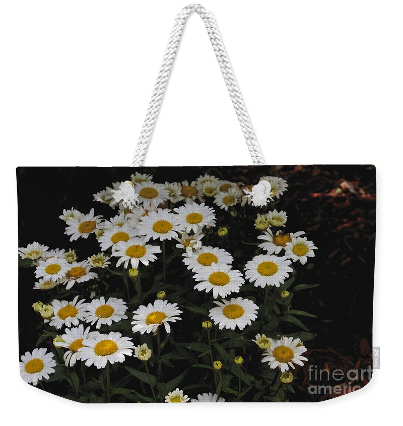 Field Weekender Tote Bag featuring the photograph Field Of Daisies by William Norton