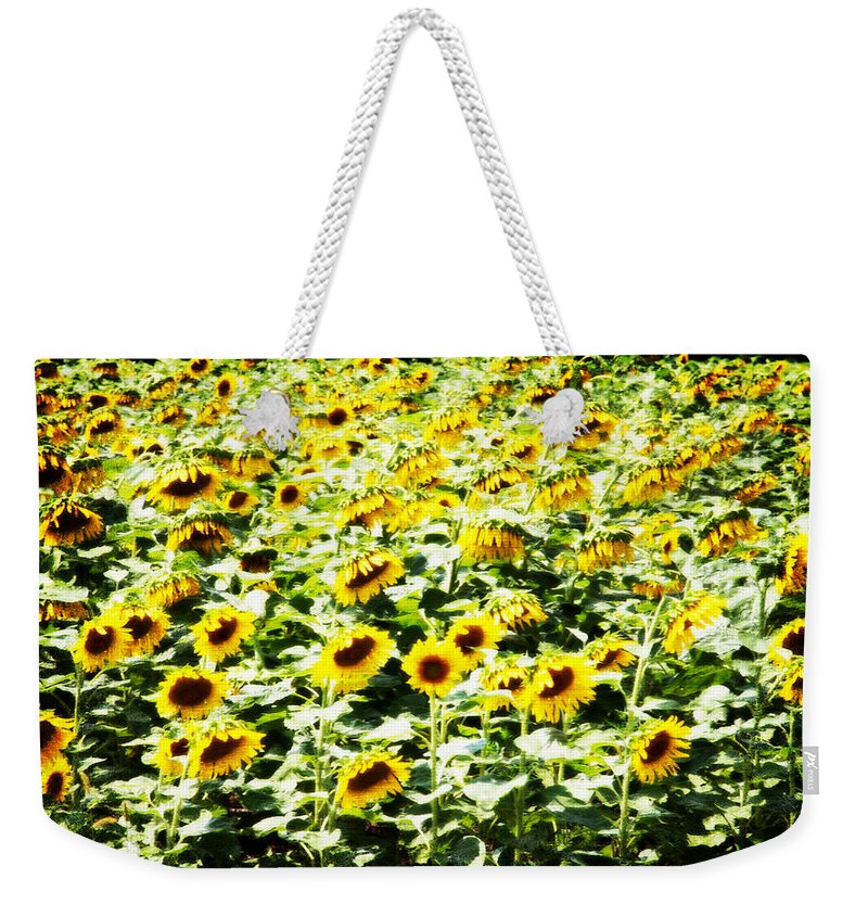 Sunflowers Weekender Tote Bag featuring the photograph Field Of Sunflowers by Alice Gipson