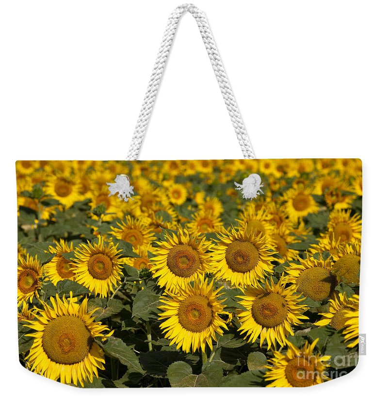 Sunflower Weekender Tote Bag featuring the photograph Field Of Sunflowers by Brian Jannsen
