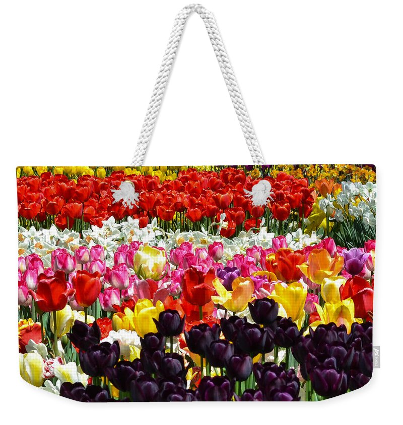 Tulips Weekender Tote Bag featuring the photograph Field Of Tulips Ll by Wanda J King