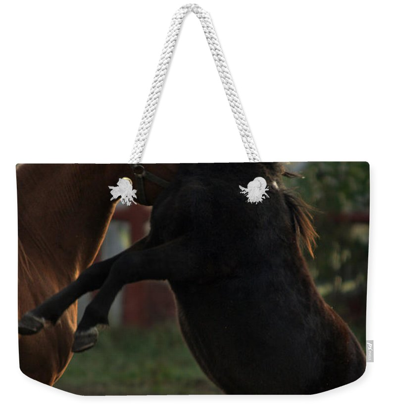 Horse Weekender Tote Bag featuring the photograph Fighting by Angel Ciesniarska