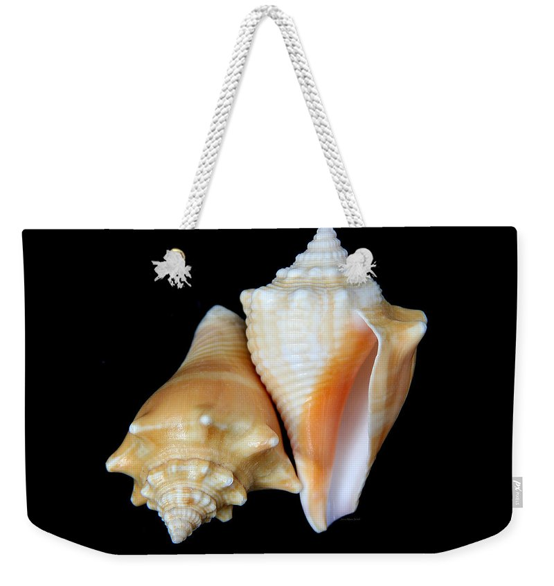Strombus Pugilis Weekender Tote Bag featuring the photograph Fighting Conch Seashells by Jennie Marie Schell