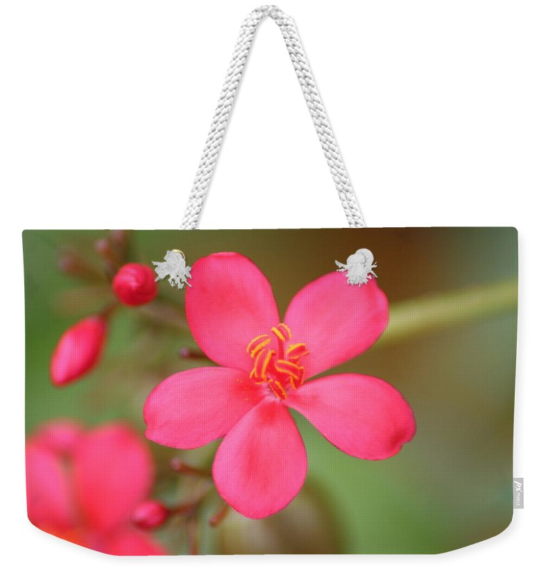Flower Weekender Tote Bag featuring the photograph Fine Tune by Sheryl Chapman Photography