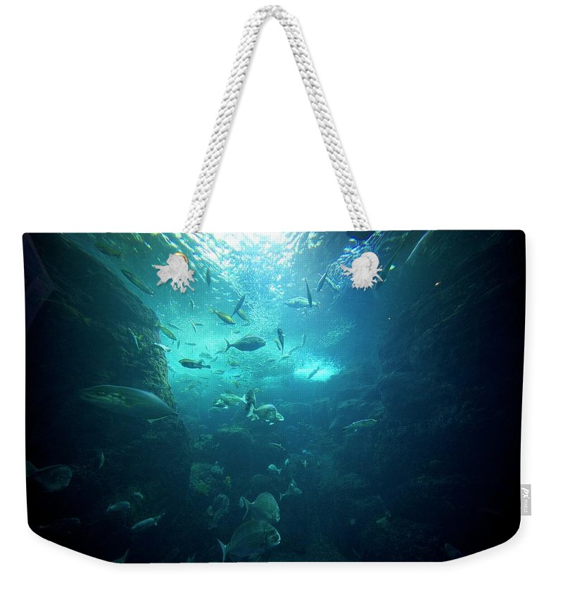 Underwater Weekender Tote Bag featuring the photograph Fishes by By Tddch