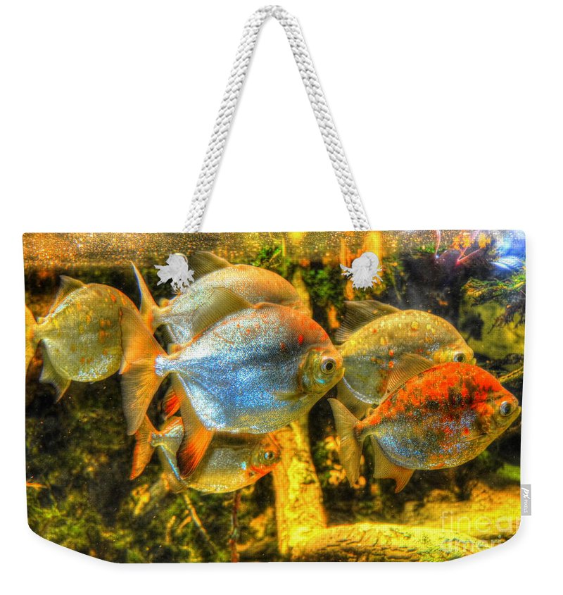 Fish Weekender Tote Bag featuring the photograph Fishfull Thinking by Debbi Granruth