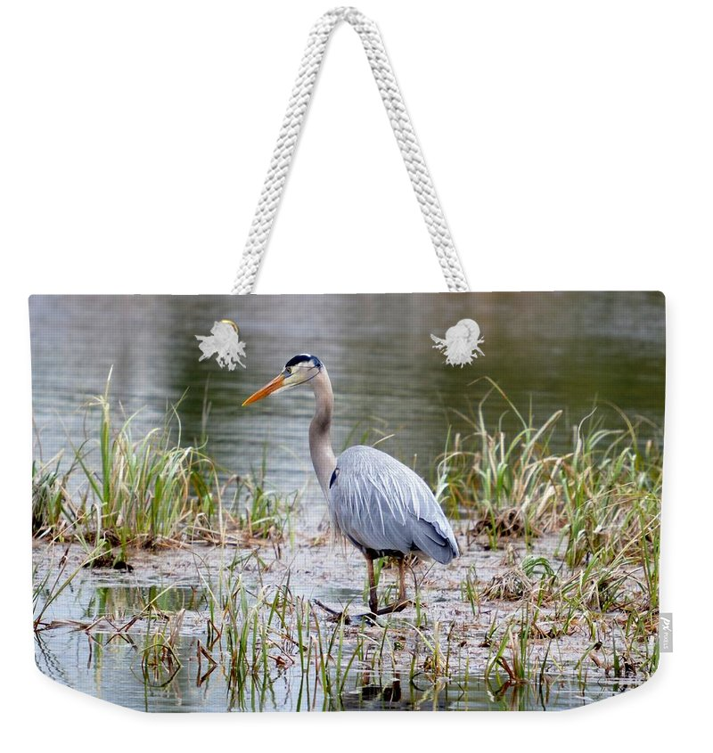 Great Blue Heron Weekender Tote Bag featuring the photograph Fishing Heron by Thomas Phillips