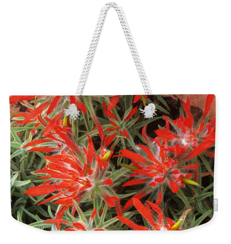 Zion Paintbrush Weekender Tote Bag featuring the photograph Flaming Zion Paintbrush Wildflowers by Dave Welling