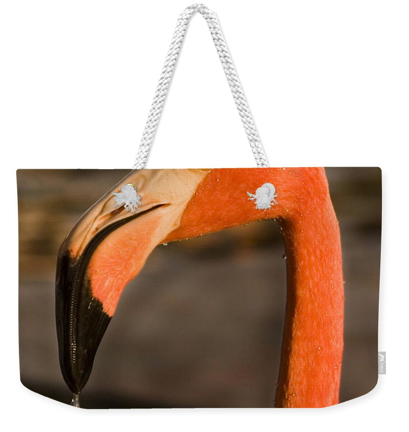 3scape Weekender Tote Bag featuring the photograph Flamingo by Adam Romanowicz