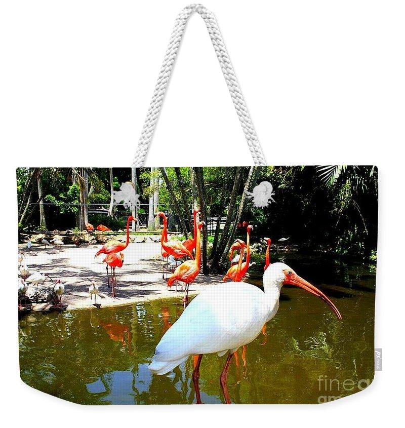 Flamingo Park In Florida - Pink Flamingos - Florida - Nature Weekender Tote Bag featuring the photograph Flamingo Park Florida by Dora Sofia Caputo Photographic Design and Fine Art