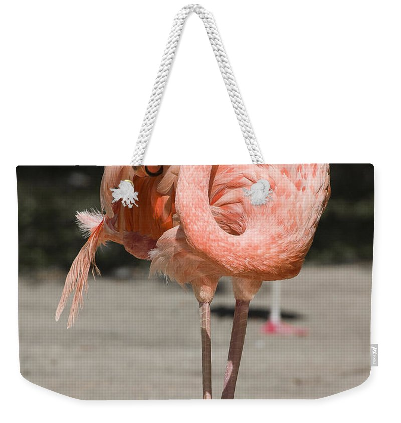 Birds Weekender Tote Bag featuring the photograph Flamingo by Steven Ralser