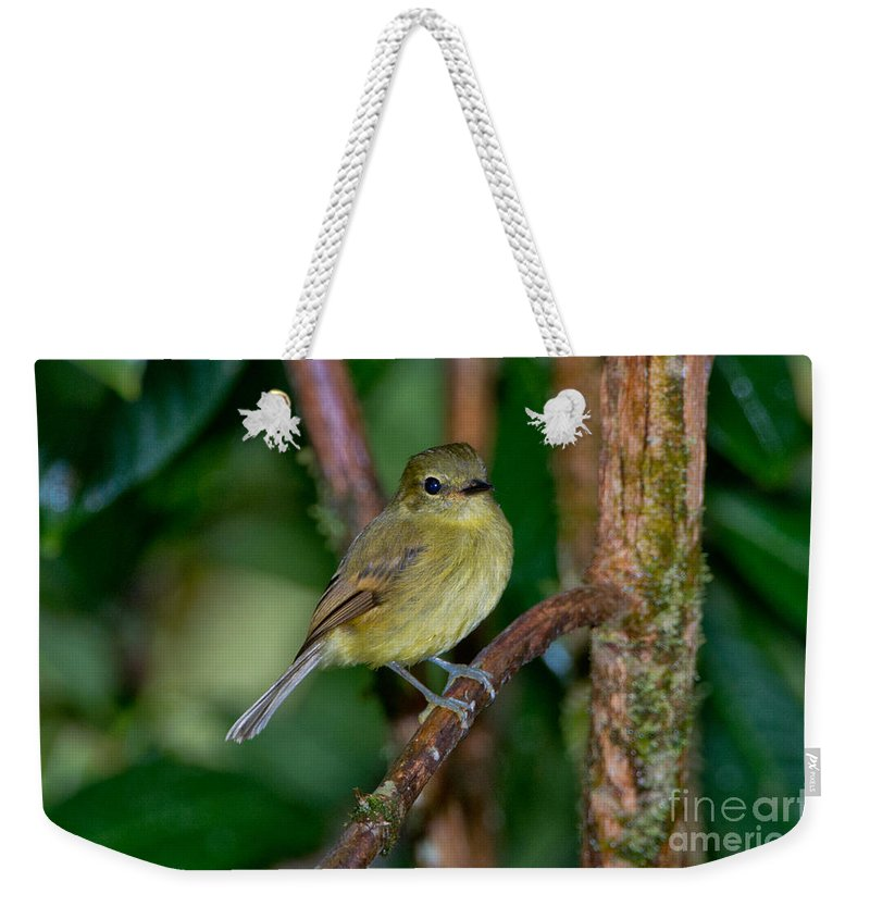 Flavescent Flycatcher Weekender Tote Bag featuring the photograph Flavescent Flycatcher by Anthony Mercieca