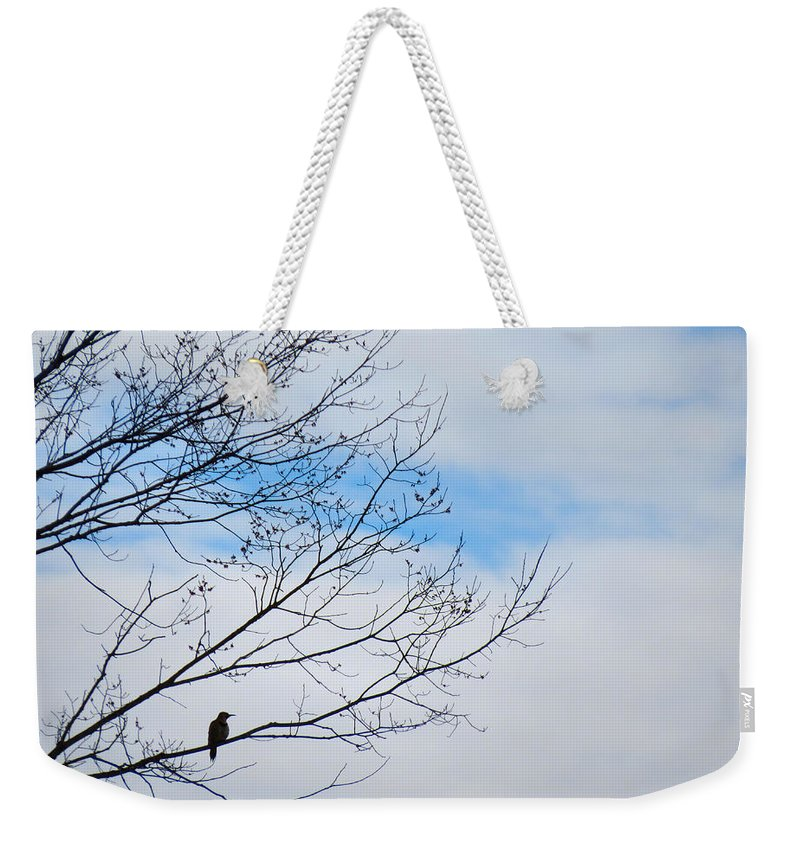 Northern Weekender Tote Bag featuring the photograph Flicker Resting by Art Dingo