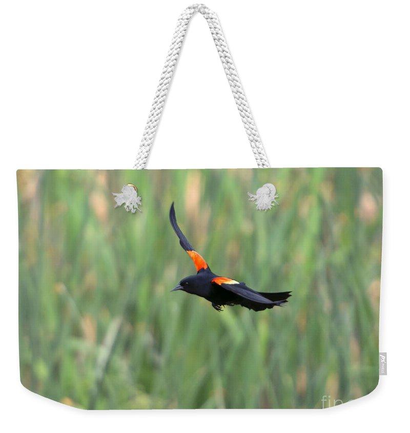 Red Winged Blackbird Weekender Tote Bags