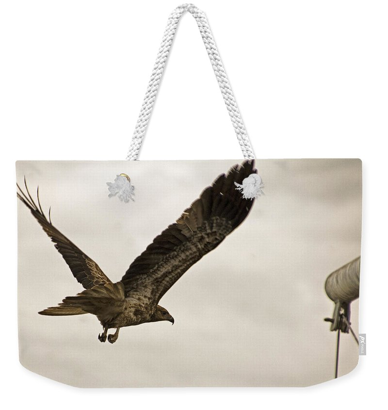 Flight Weekender Tote Bag featuring the photograph Flight Of The Brown Kite V7 by Douglas Barnard
