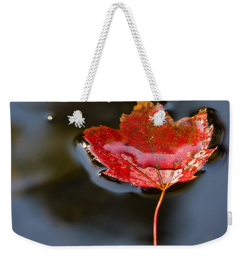 Fall Weekender Tote Bag featuring the photograph Float by Edward Fielding