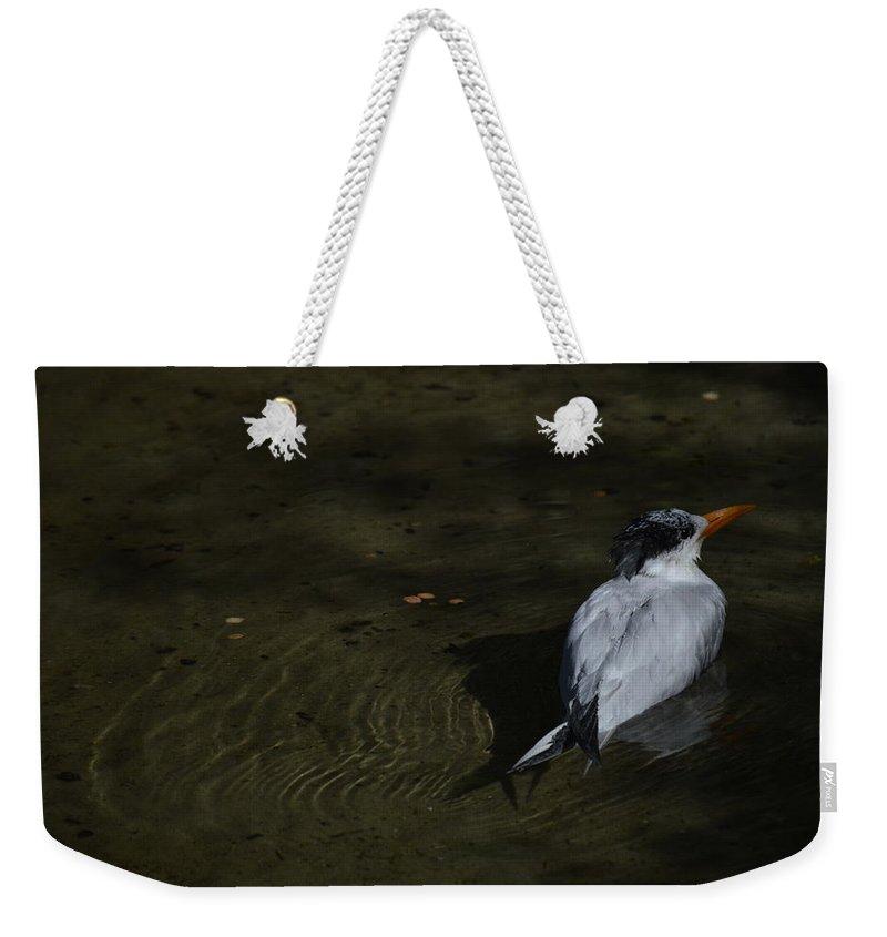Bird Weekender Tote Bag featuring the photograph Floating by Linda Kerkau