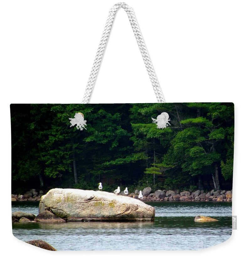 Sea Gulls Weekender Tote Bag featuring the photograph Flock Of Friends by Elizabeth Dow