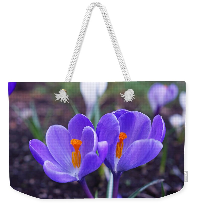 Purple Weekender Tote Bag featuring the photograph Floral Garden Purple Crocus Flower Art Prints by Patti Baslee