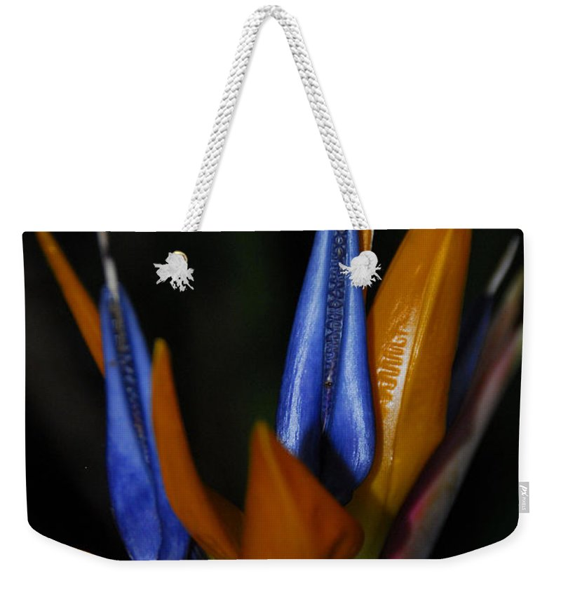 Bird Of Paradise Weekender Tote Bag featuring the photograph Floral Points by Cindy Manero